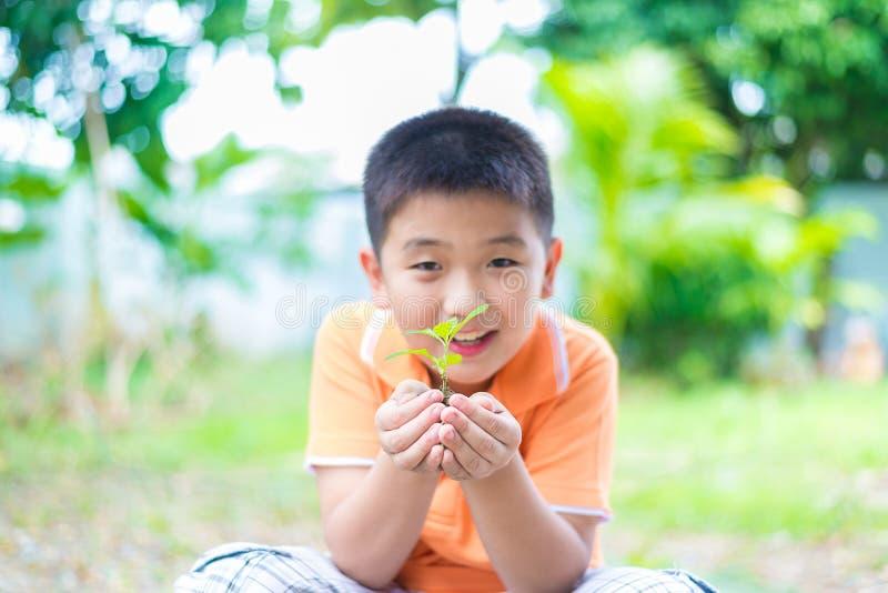 亚裔孩子在手上的拿着年轻幼木植物,在庭院里,  免版税库存照片