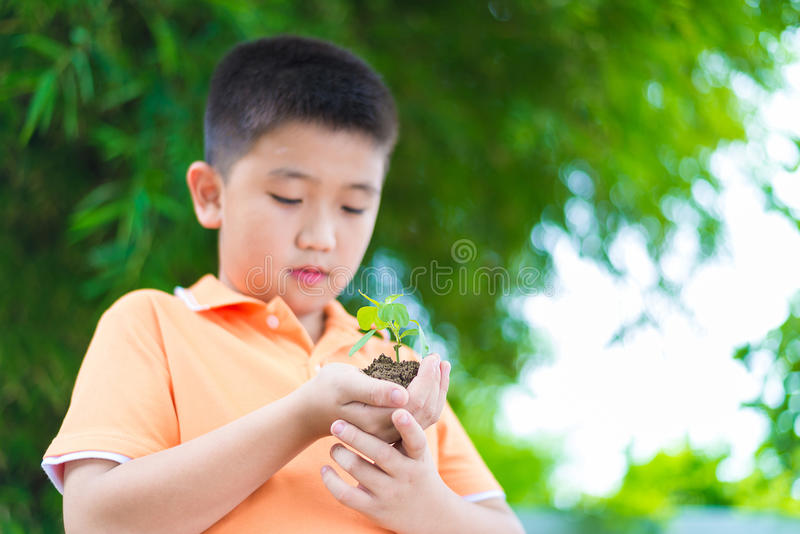 亚裔孩子在手上的拿着年轻幼木植物,在庭院里,  库存照片