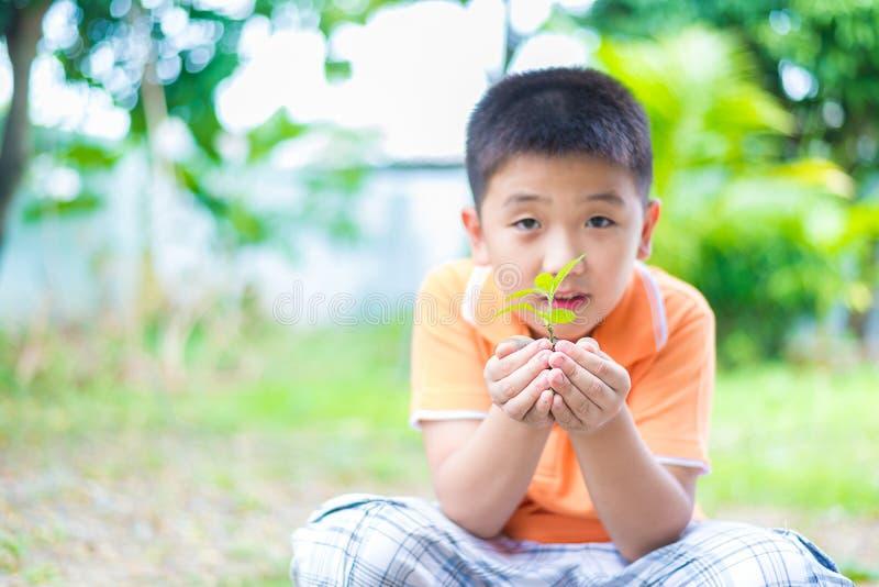 亚裔孩子在手上的拿着年轻幼木植物,在庭院里,  图库摄影