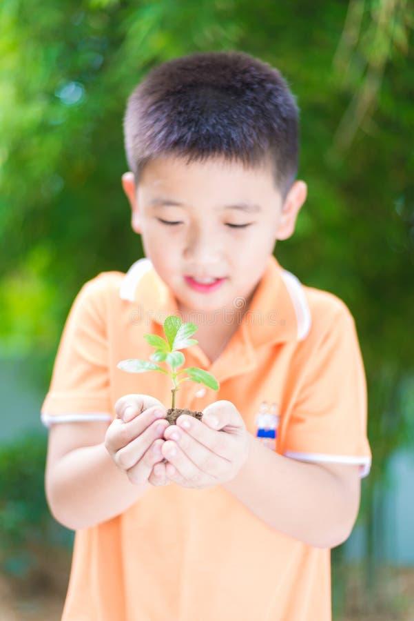 亚裔孩子在手上的拿着年轻幼木植物,在庭院里,  免版税库存图片
