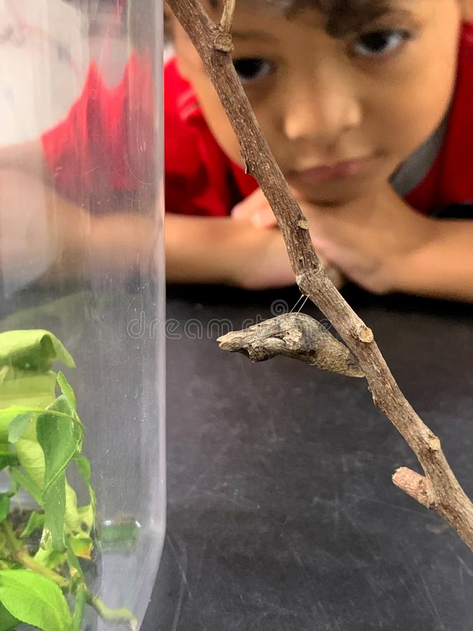 亚裔孩子坐看垂悬从分支的毛虫 库存照片