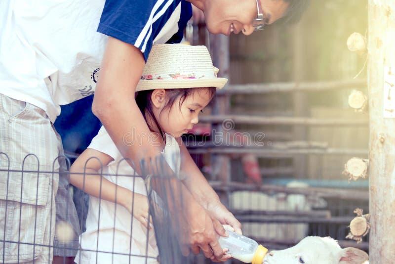 亚裔小女孩和父亲哺养牛奶对羊羔