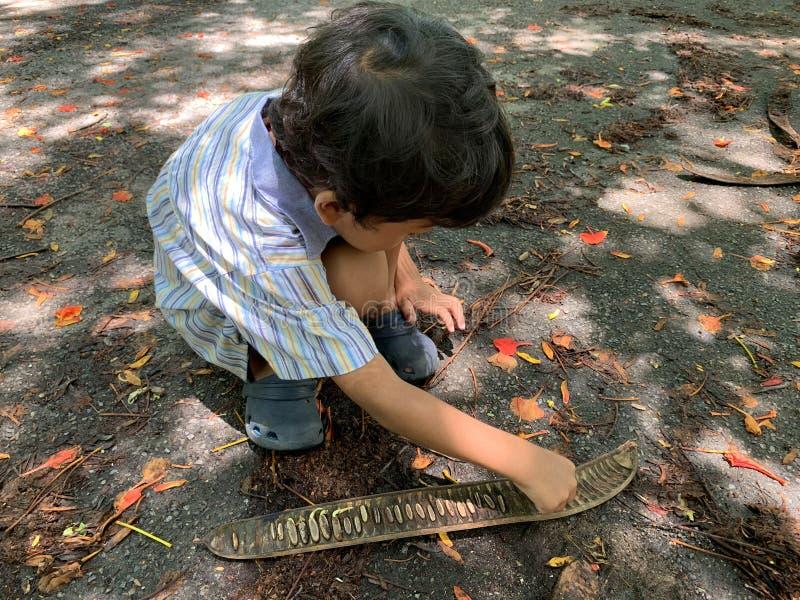 亚裔男孩演奏从树落的种子 库存图片