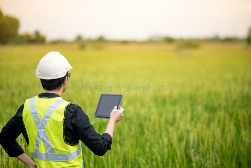 亚裔男性农艺师观察在米领域 免版税库存图片
