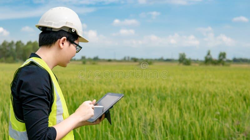 亚裔男性农艺师观察在米领域 库存照片