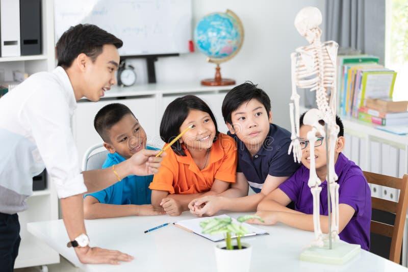 亚裔老师解释一个人体结构对小的学生 免版税库存图片