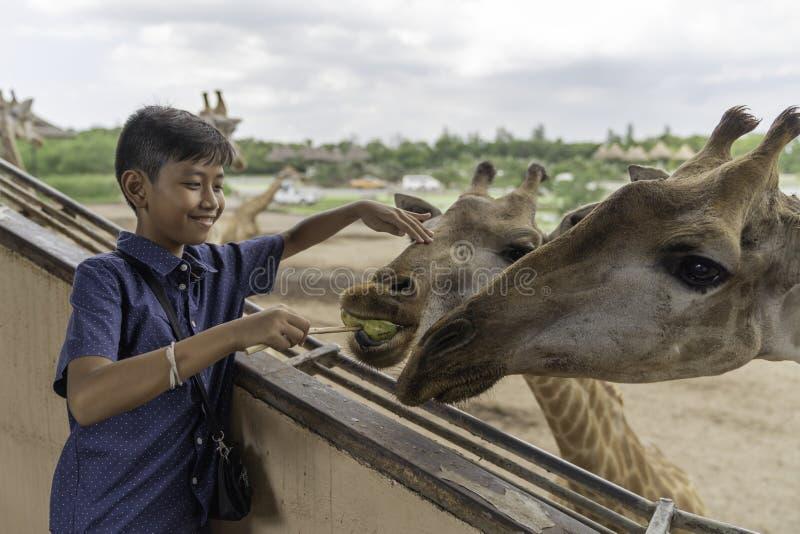 亚裔逗人喜爱的长颈鹿的男孩哺养的香蕉 免版税库存图片