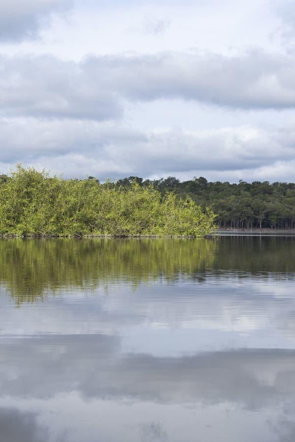 亚马孙河和地方植被看法与天空反射了  库存照片