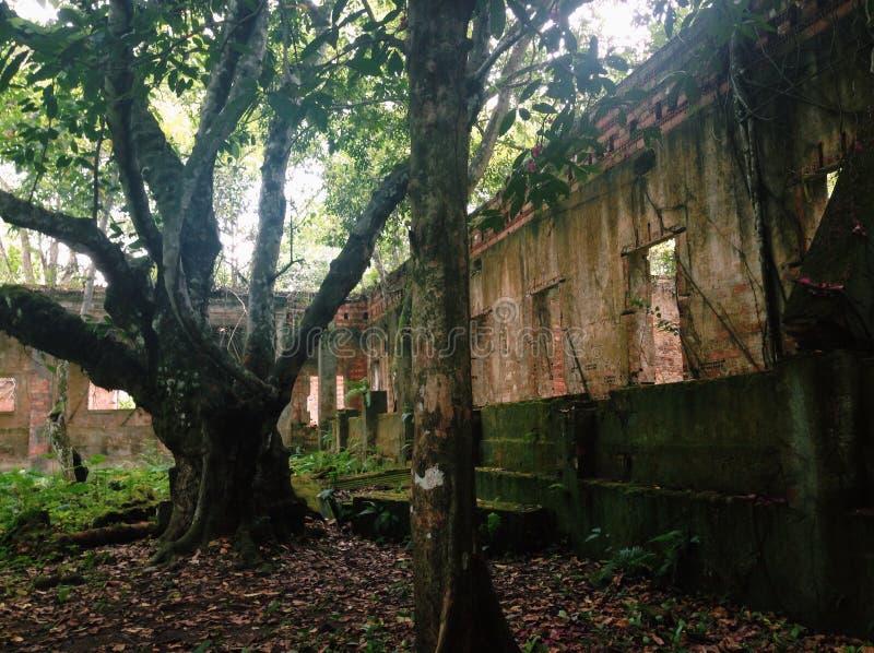 亚马逊历史废墟  免版税图库摄影