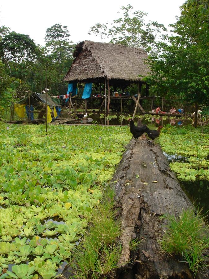 亚马逊家 免版税库存照片