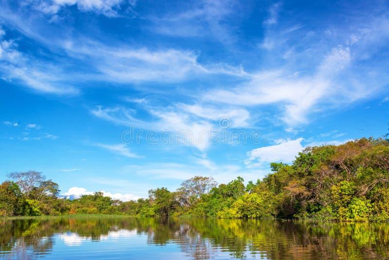 亚马逊密林在巴西 免版税库存图片