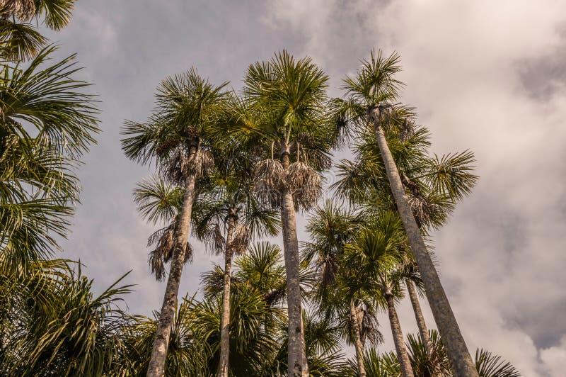 亚马逊密林 库存照片