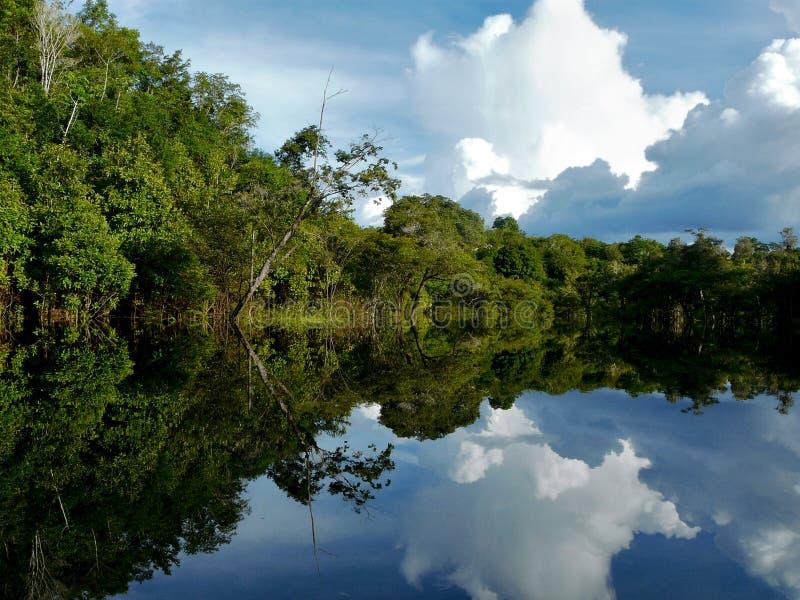 亚马逊巴西河 库存图片
