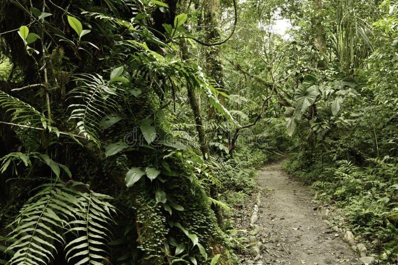 亚马逊深绿色热带密林的雨 免版税库存图片