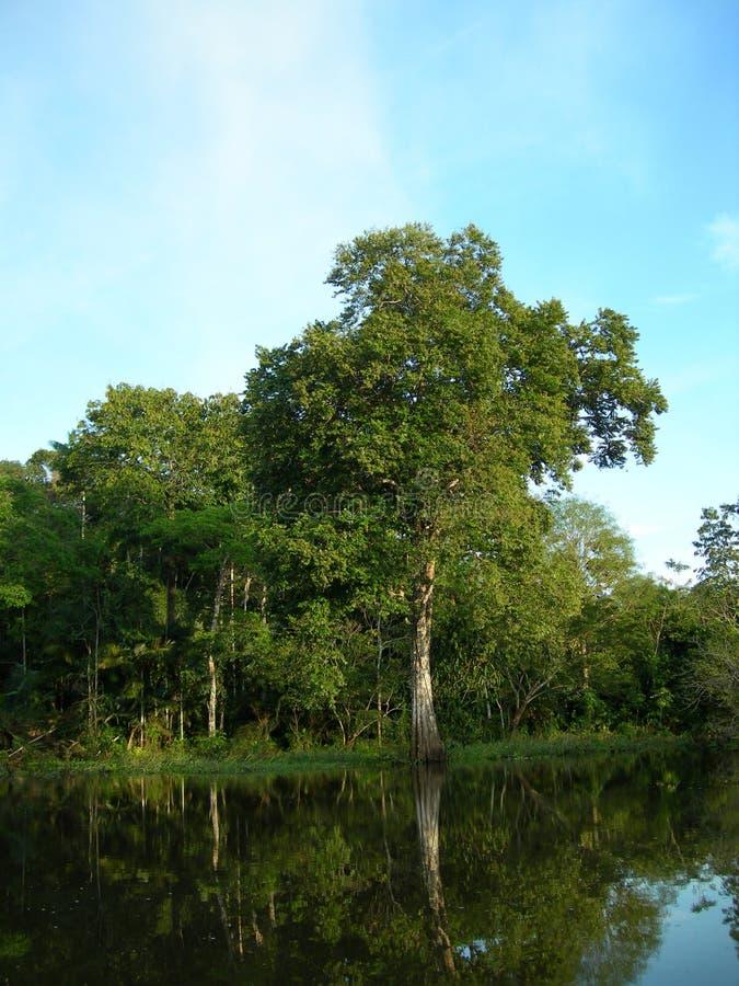 亚马逊热带森林的河 免版税库存照片
