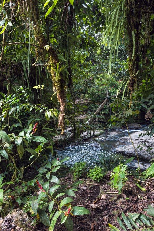 亚马逊热带雨林在厄瓜多尔 免版税库存照片