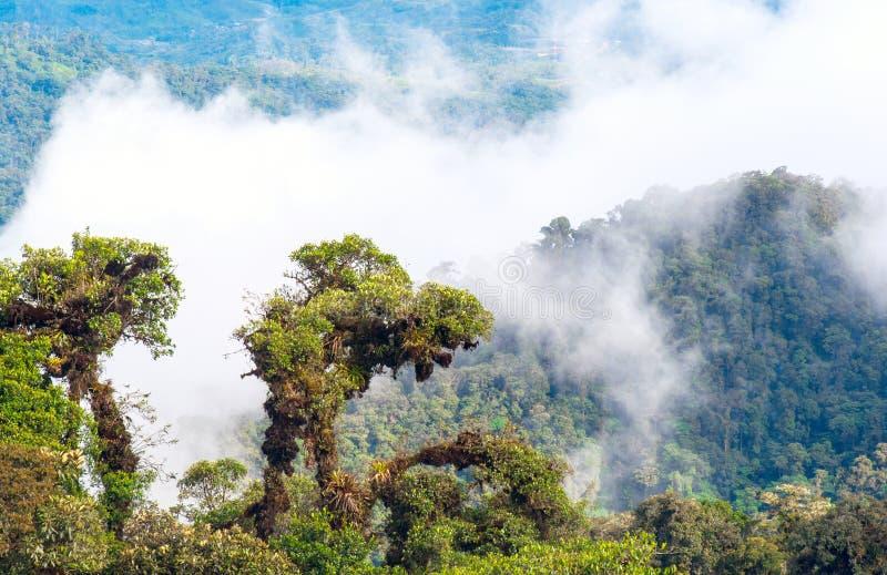 亚马逊热带雨林,厄瓜多尔 图库摄影