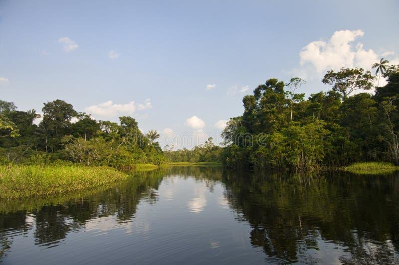 亚马逊盆地 免版税图库摄影