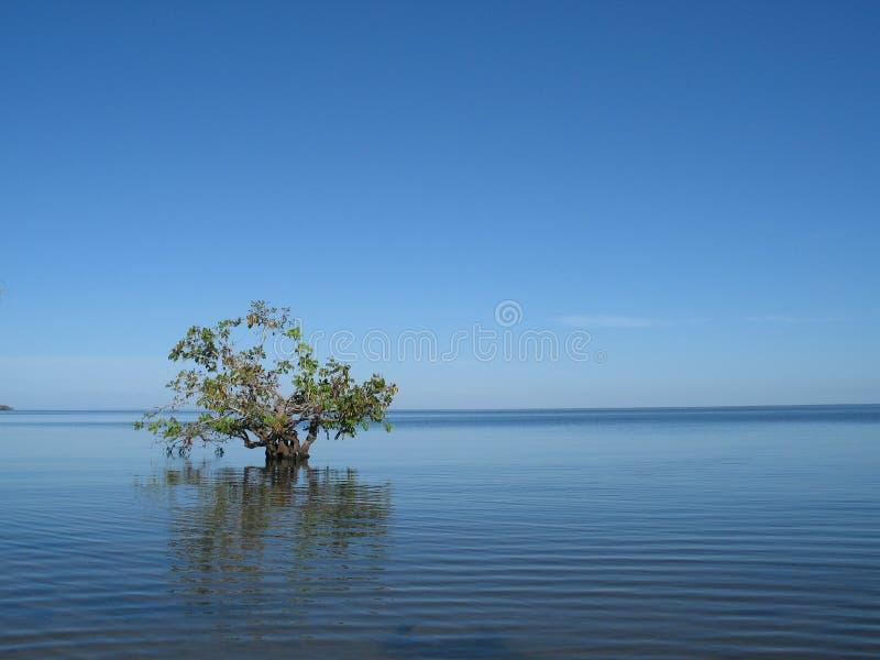 亚马逊结构树 库存图片