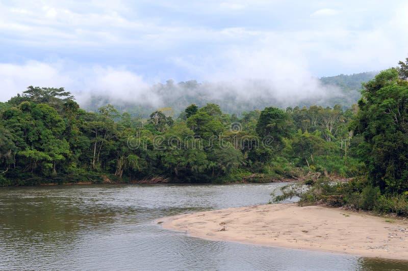 亚马逊,热带雨林的看法,厄瓜多尔 图库摄影