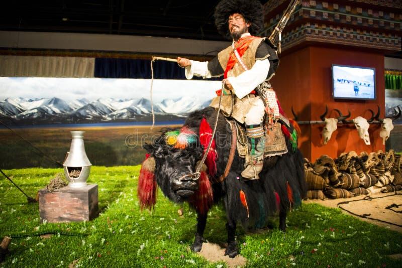 亚洲中国,北京,资本博物馆,西藏高原牦牛开化陈列 免版税库存照片