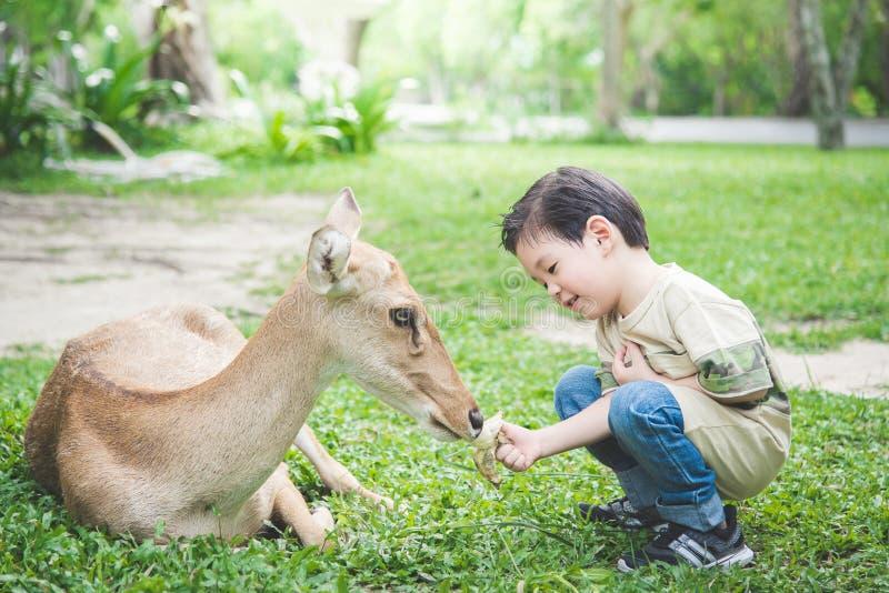 亚洲喂小孩鹿 库存照片
