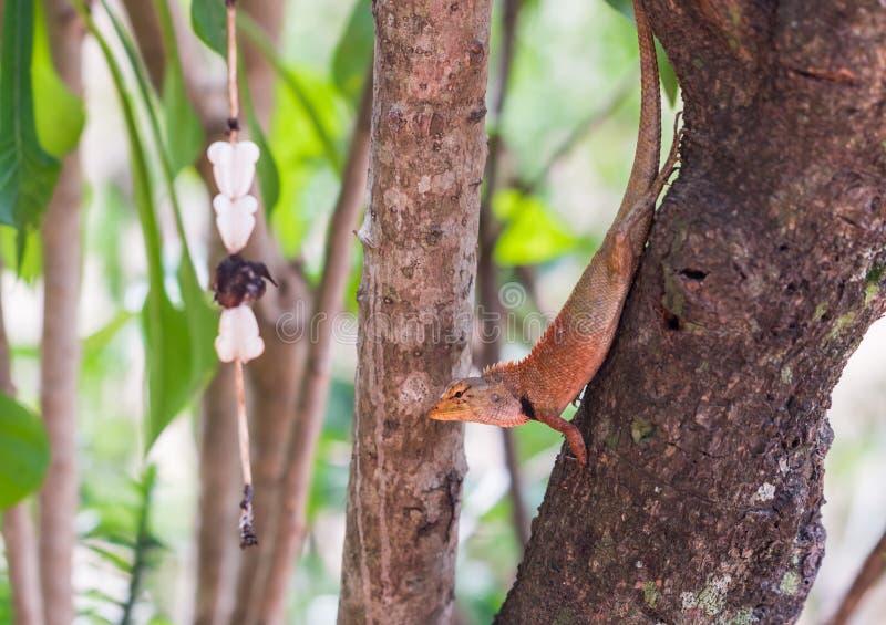 Download 亚洲小的蜥蜴 库存图片. 图片 包括有 眼睛, 特写镜头, 下落, 敌意, 盖子, 秘密行动, 宏指令, 通配 - 72369553