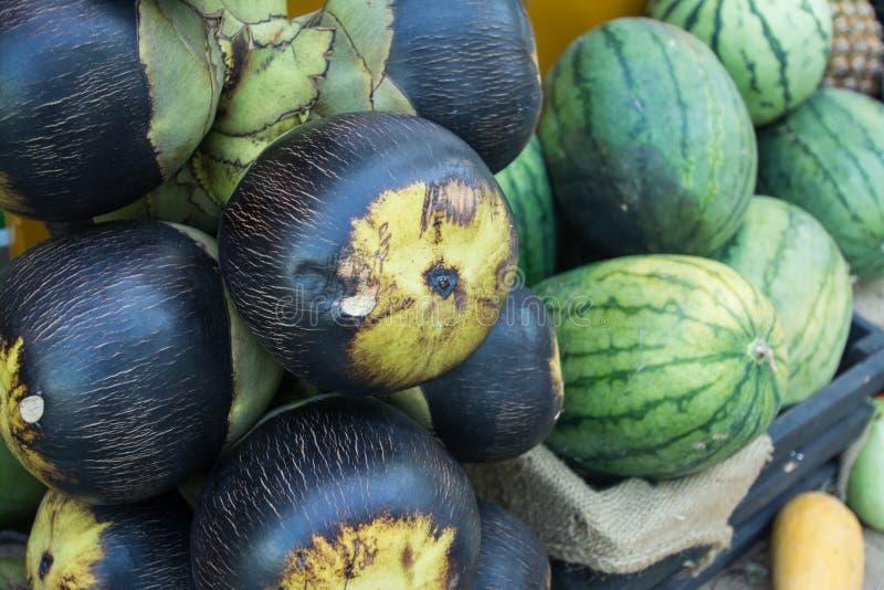 亚洲扇叶树头榈棕榈,棕榈汁用西瓜 免版税库存照片