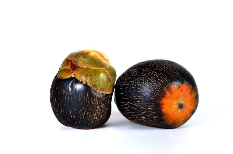 亚洲扇叶树头榈棕榈,棕榈汁,桄榔,柬埔寨棕榈 免版税图库摄影