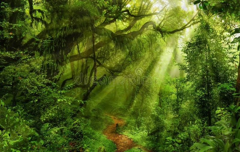 亚洲森林雨 库存照片