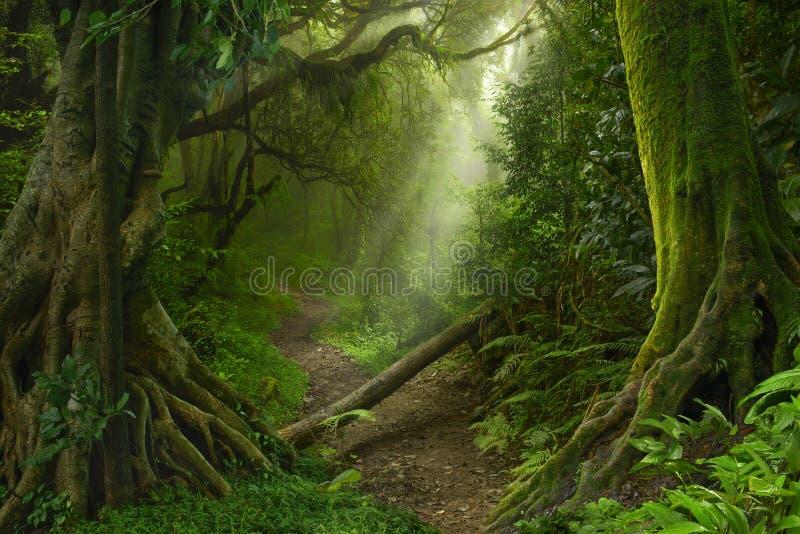 亚洲森林雨 免版税库存照片