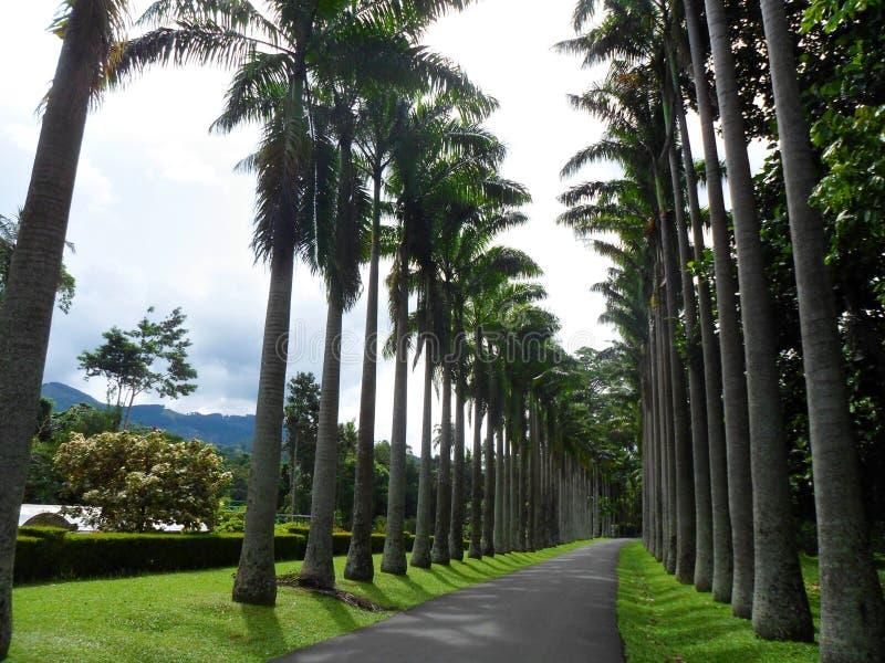 亚洲植物园 免版税库存图片