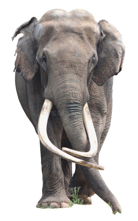 大象一生要换几次牙? 大象一生图片