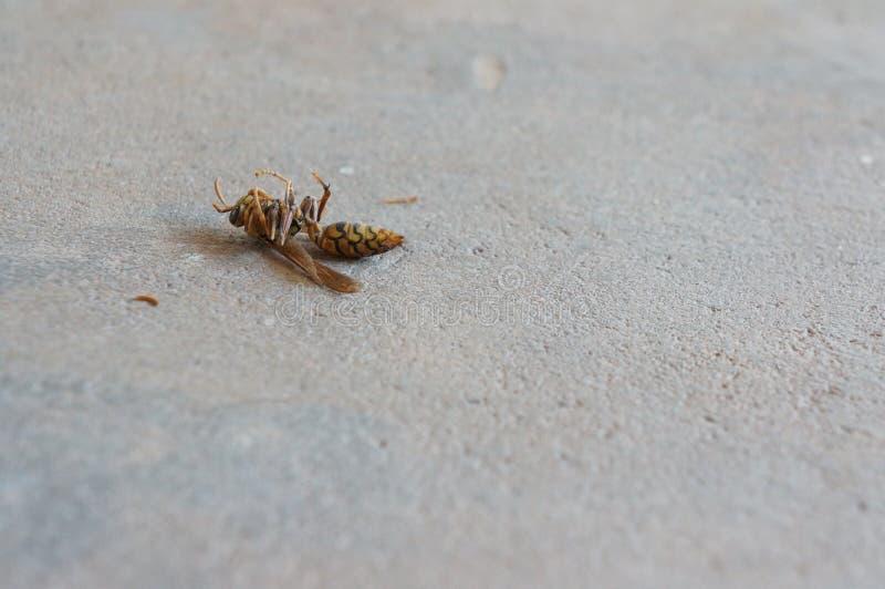 死亡昆虫在泰国 库存图片
