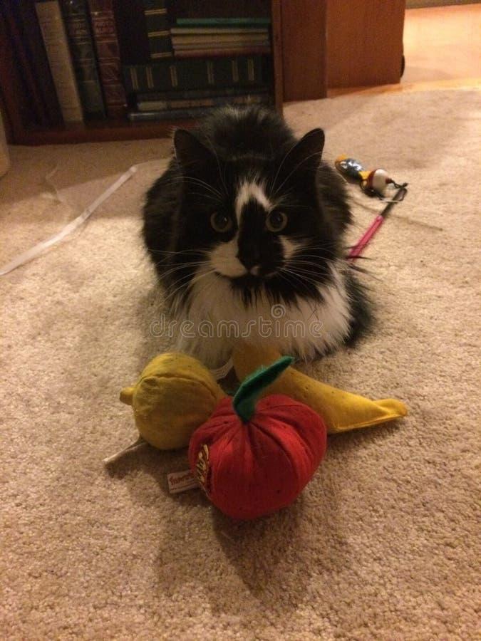 亢奋小猫用猫薄荷果子 免版税图库摄影