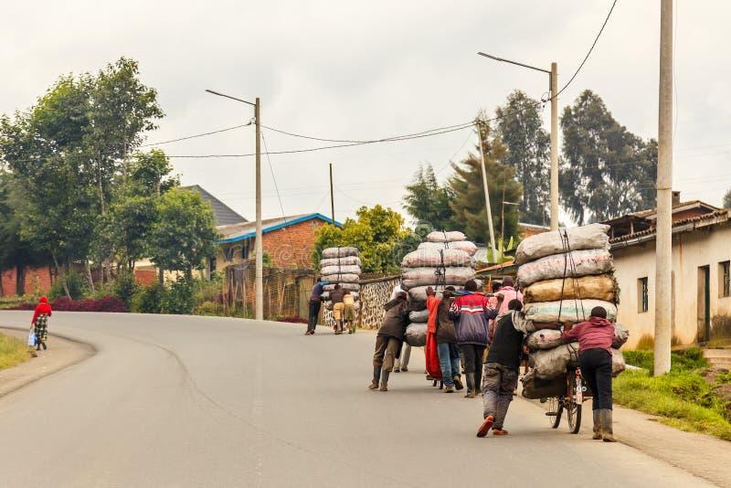 交付从领域的卢旺达农夫人庄稼在用大袋装载的自行车,卢旺达中部 免版税库存照片