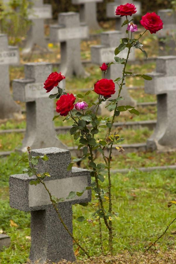 交叉红色玫瑰小的丝毫 免版税库存图片