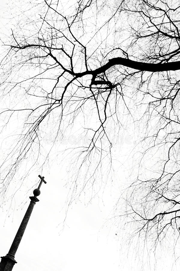 交叉结构树 库存照片
