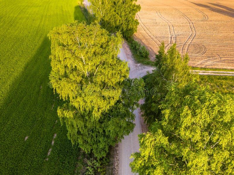 交叉路的寄生虫照片在树之间的在五颜六色的早Spr 库存图片