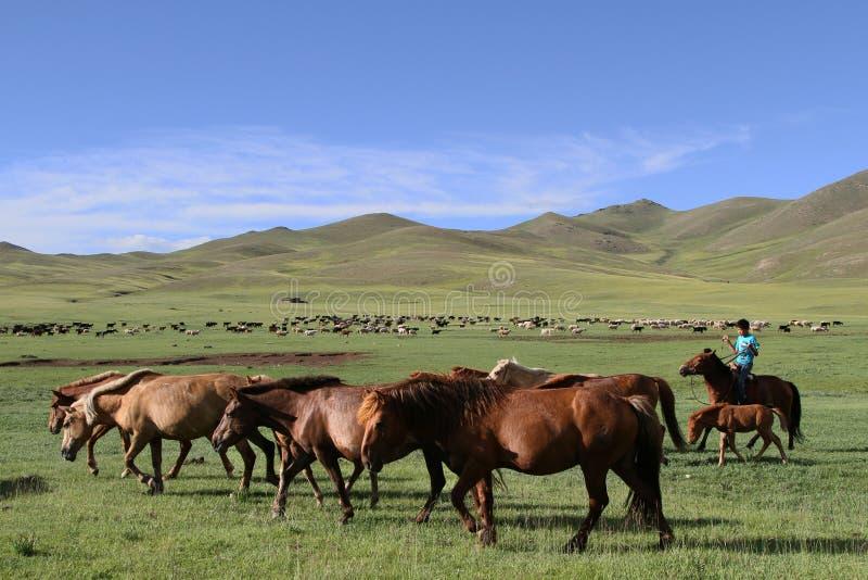 交配动物者和他的牧群在干草原。 图库摄影