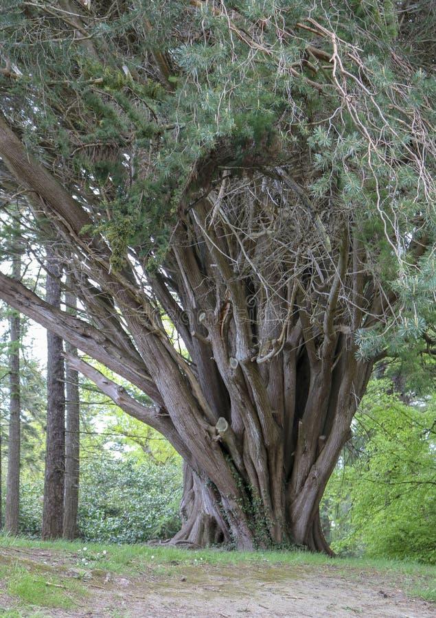 交错的树干 免版税库存图片