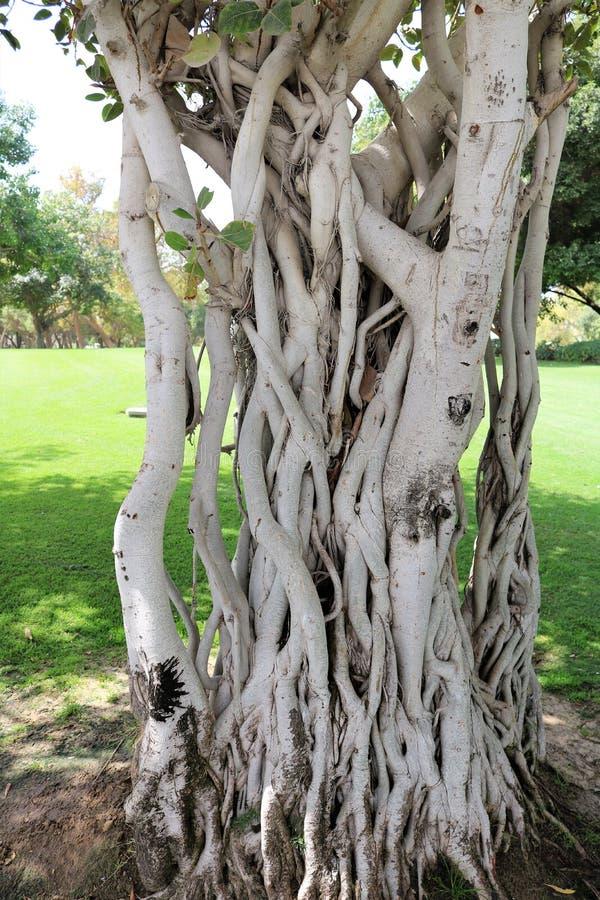 交错的树干 免版税库存照片