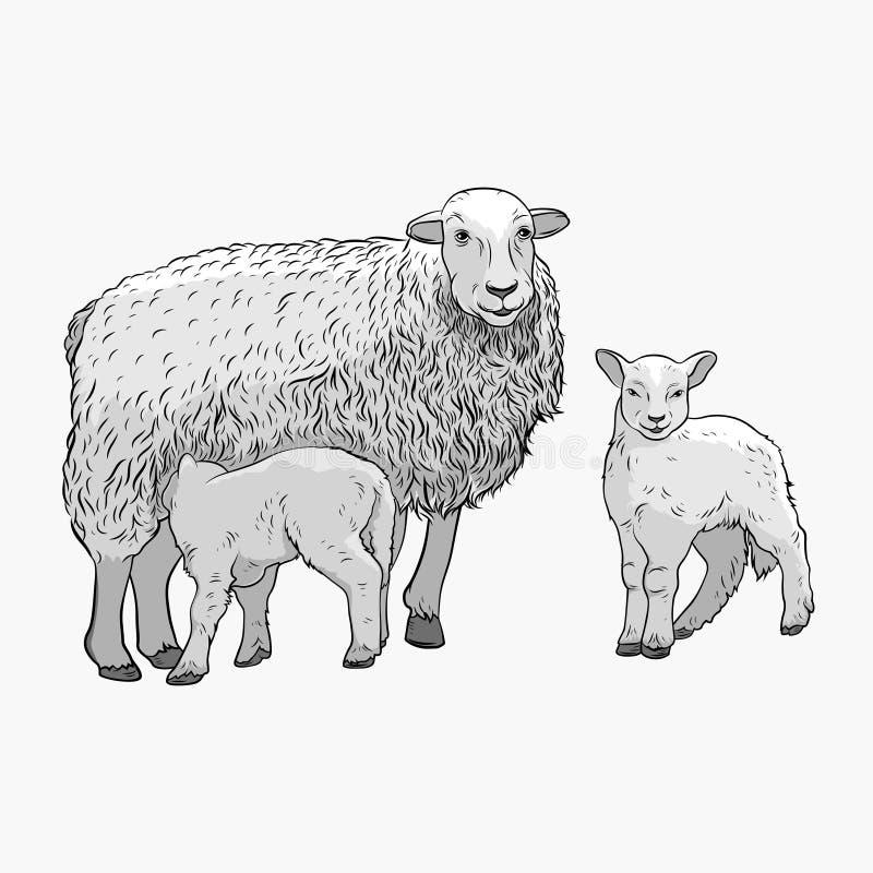 产小羊绵羊二 绵羊喂养羊羔 也corel凹道例证向量 皇族释放例证