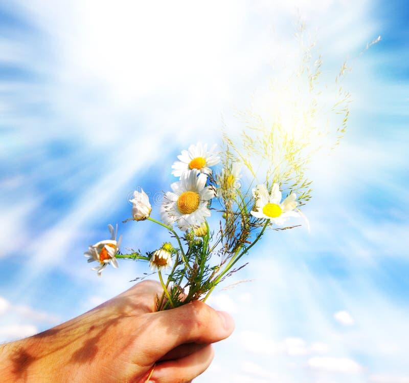 产生春天的花