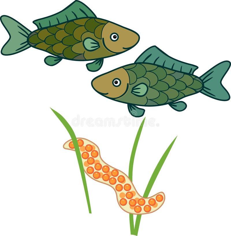 产生淡水鱼 皇族释放例证