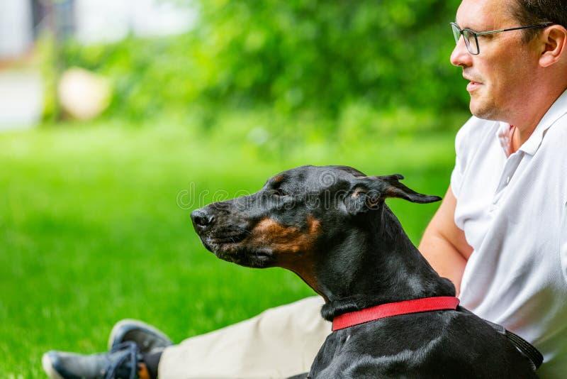 享受一个晴天的年轻人在有他的狗的公园 Dobermann 他们演奏一起说谎在绿草 库存照片