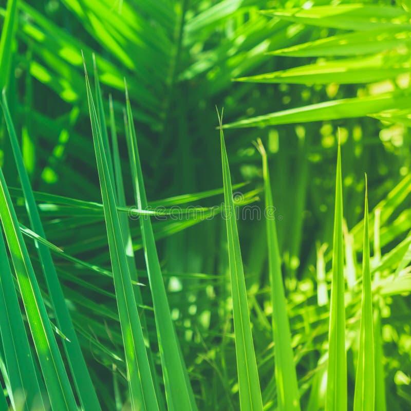 享受一个热带梦想 图库摄影