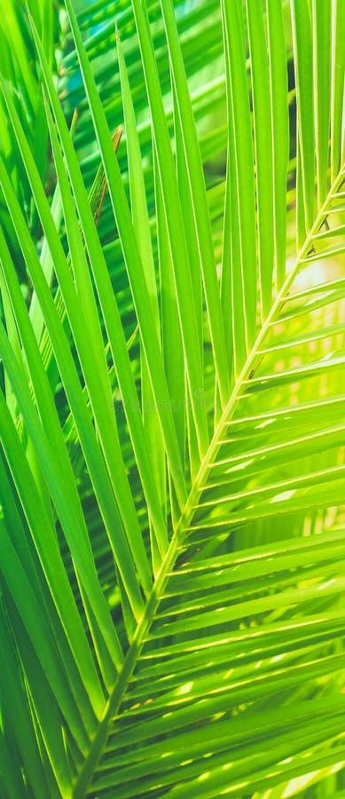 享受一个热带梦想 免版税图库摄影