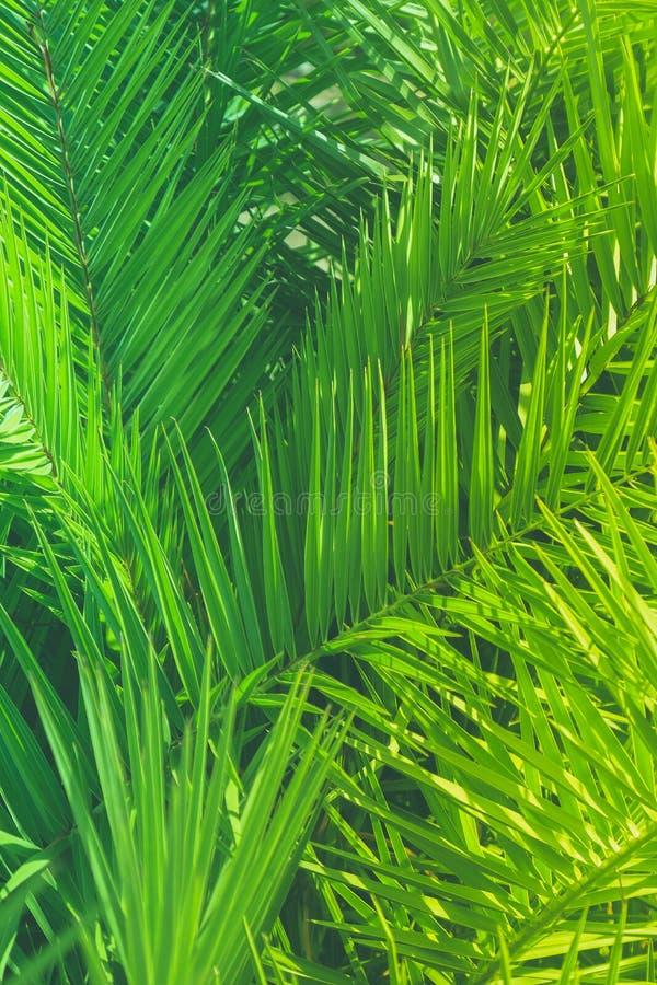 享受一个热带梦想 库存图片
