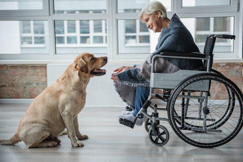 享受与狗的镇静残疾资深妇女时间 库存照片